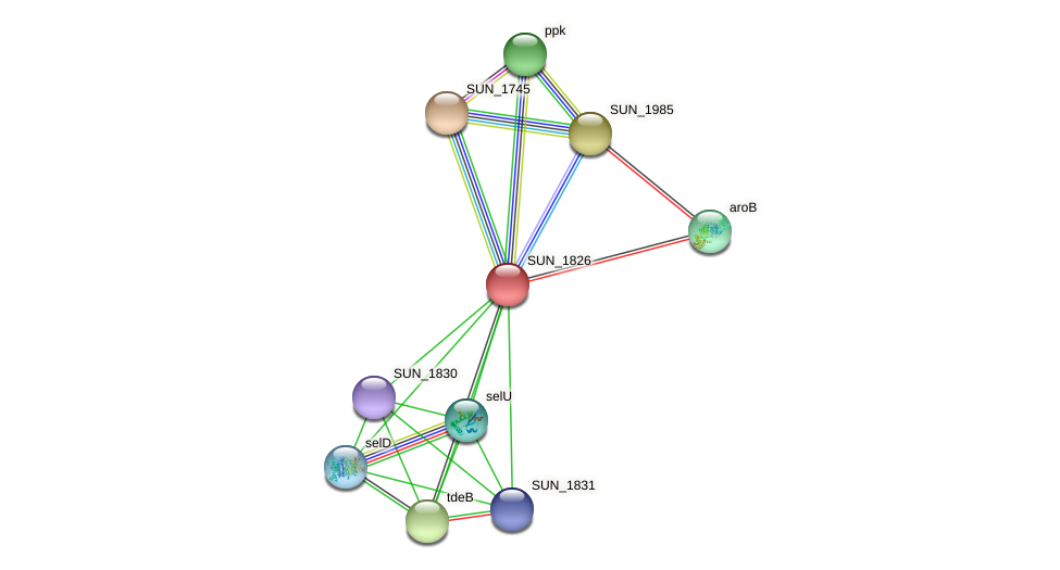 SUN_1826 protein (Sulfurovum sp. NBC371) - STRING interaction network