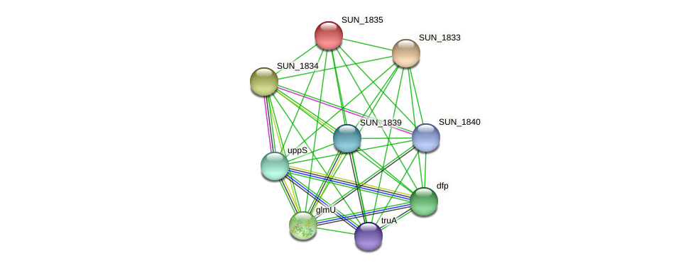 SUN_1835 protein (Sulfurovum sp. NBC371) - STRING interaction network