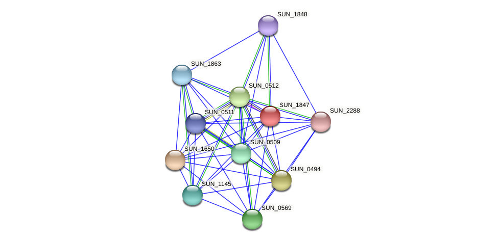 SUN_1847 protein (Sulfurovum sp. NBC371) - STRING interaction network
