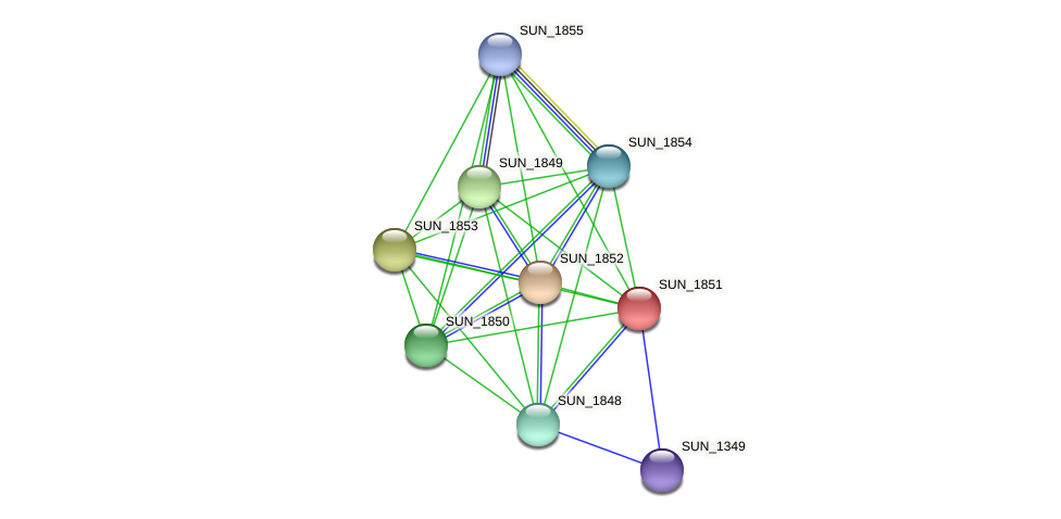 SUN_1851 protein (Sulfurovum sp. NBC371) - STRING interaction network