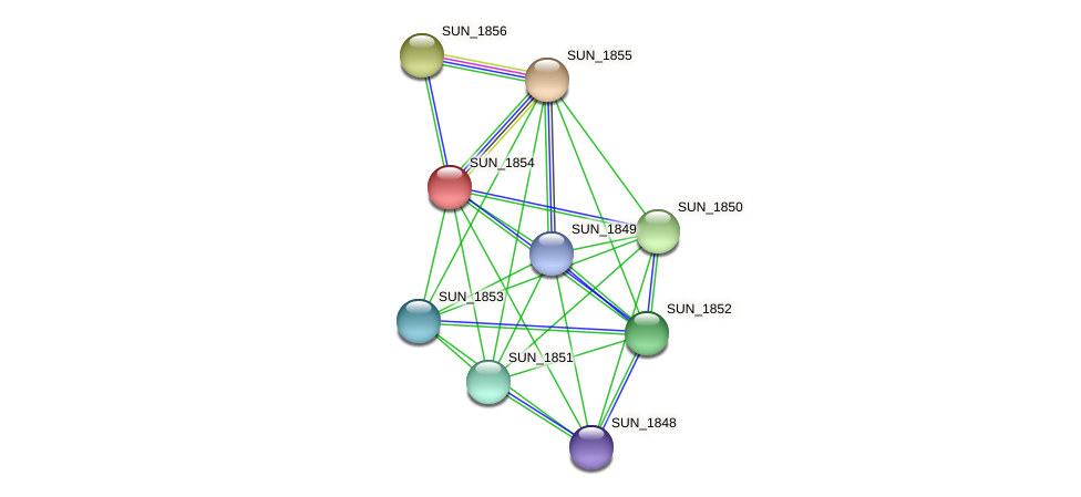 SUN_1854 protein (Sulfurovum sp. NBC371) - STRING interaction network