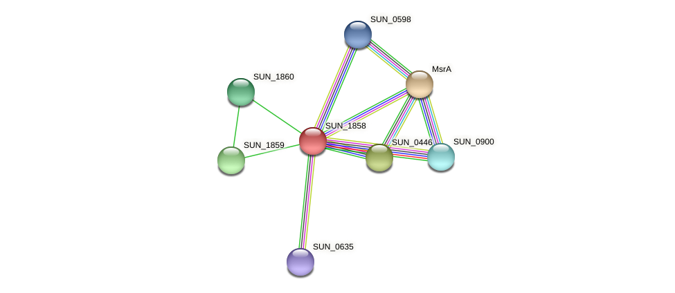 SUN_1858 protein (Sulfurovum sp. NBC371) - STRING interaction network