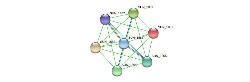 SUN_1861 protein (Sulfurovum sp. NBC371) - STRING interaction network