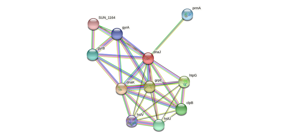 dnaJ protein (Sulfurovum sp. NBC371) - STRING interaction network