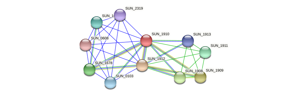SUN_1910 protein (Sulfurovum sp. NBC371) - STRING interaction network