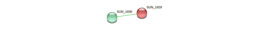 SUN_1929 protein (Sulfurovum sp. NBC371) - STRING interaction network