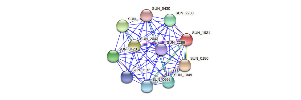 SUN_1931 protein (Sulfurovum sp. NBC371) - STRING interaction network