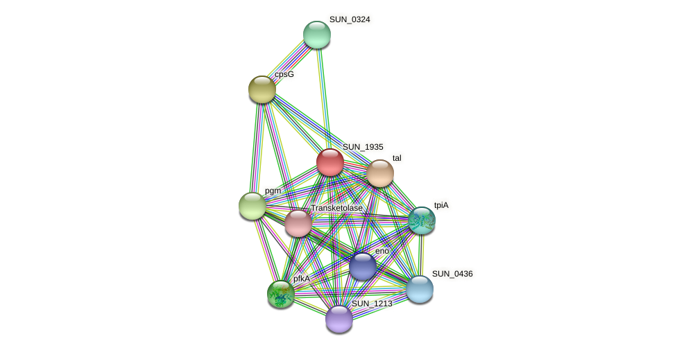 SUN_1935 protein (Sulfurovum sp. NBC371) - STRING interaction network