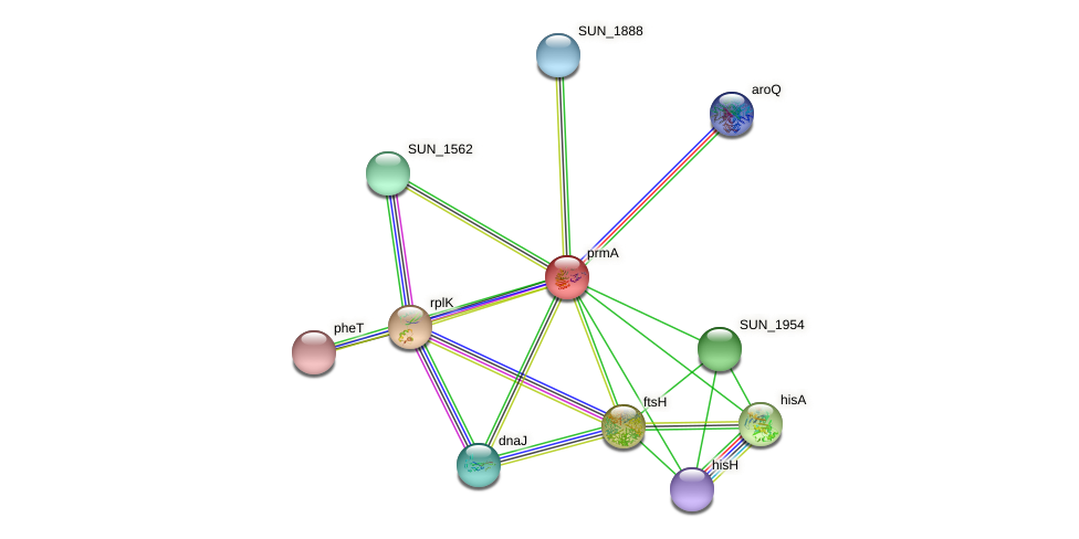 prmA protein (Sulfurovum sp. NBC371) - STRING interaction network
