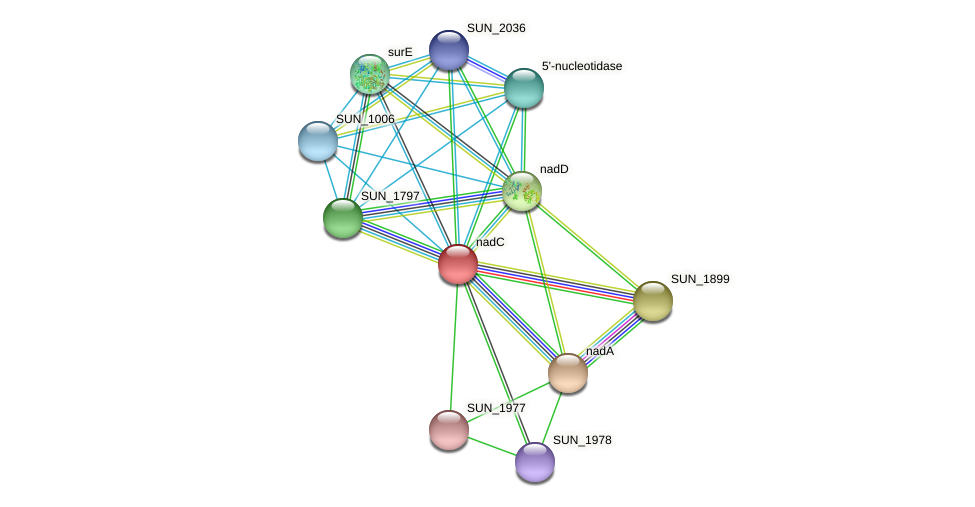 nadC protein (Sulfurovum sp. NBC371) - STRING interaction network