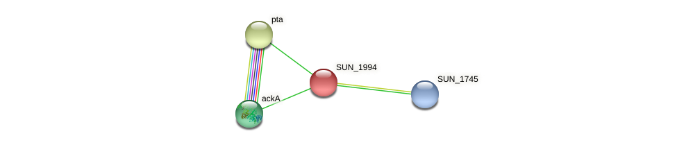 SUN_1994 protein (Sulfurovum sp. NBC371) - STRING interaction network