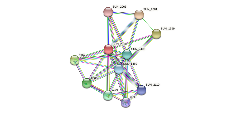 SUN_2000 protein (Sulfurovum sp. NBC371) - STRING interaction network