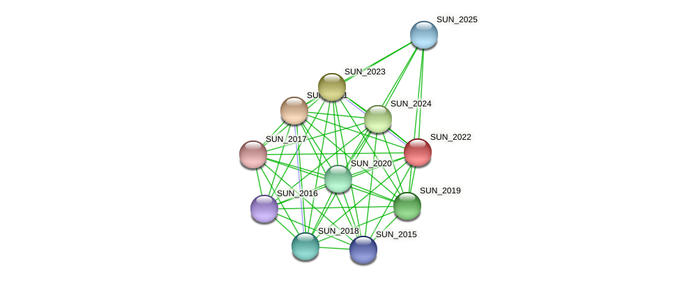 SUN_2022 protein (Sulfurovum sp. NBC371) - STRING interaction network
