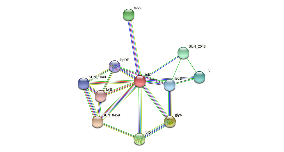 folC protein (Sulfurovum sp. NBC371) - STRING interaction network