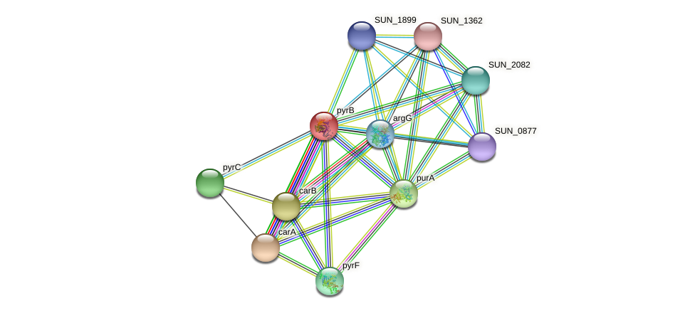 pyrB protein (Sulfurovum sp. NBC371) - STRING interaction network