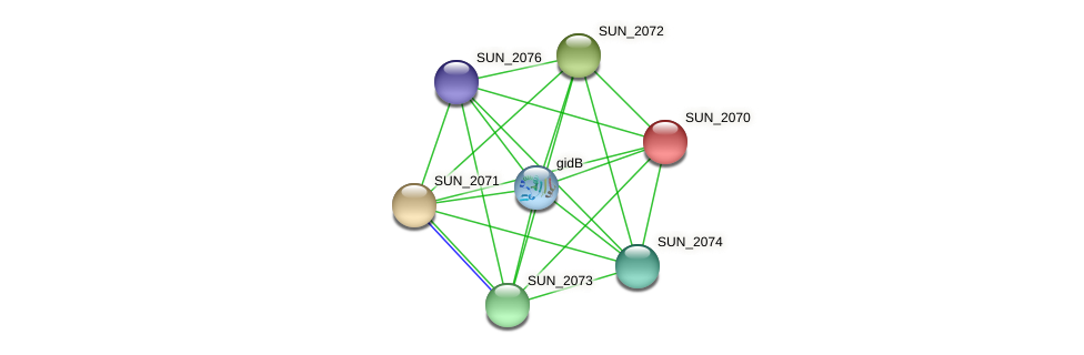 SUN_2070 protein (Sulfurovum sp. NBC371) - STRING interaction network