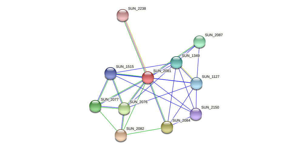 SUN_2081 protein (Sulfurovum sp. NBC371) - STRING interaction network