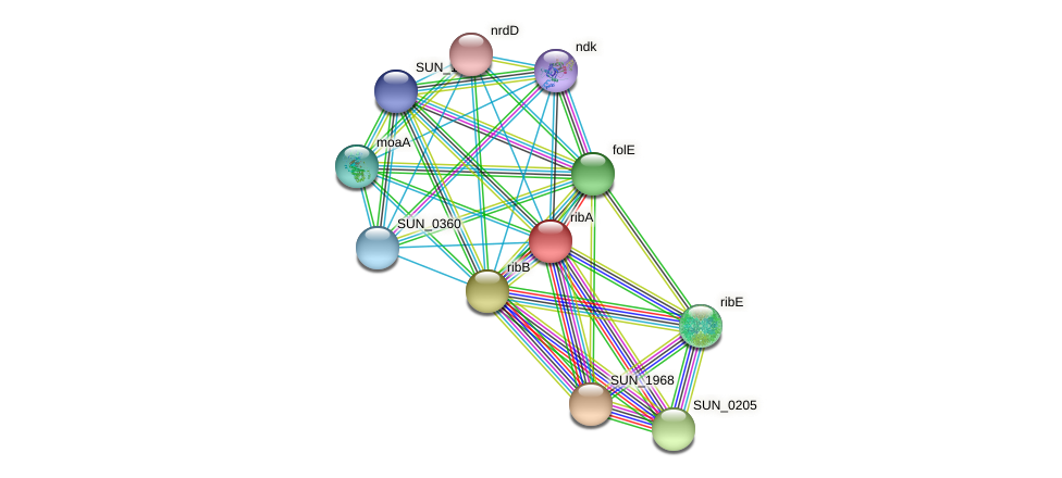 ribA protein (Sulfurovum sp. NBC371) - STRING interaction network