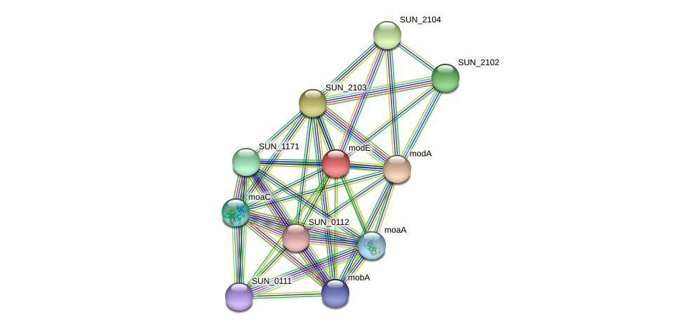 modE protein (Sulfurovum sp. NBC371) - STRING interaction network