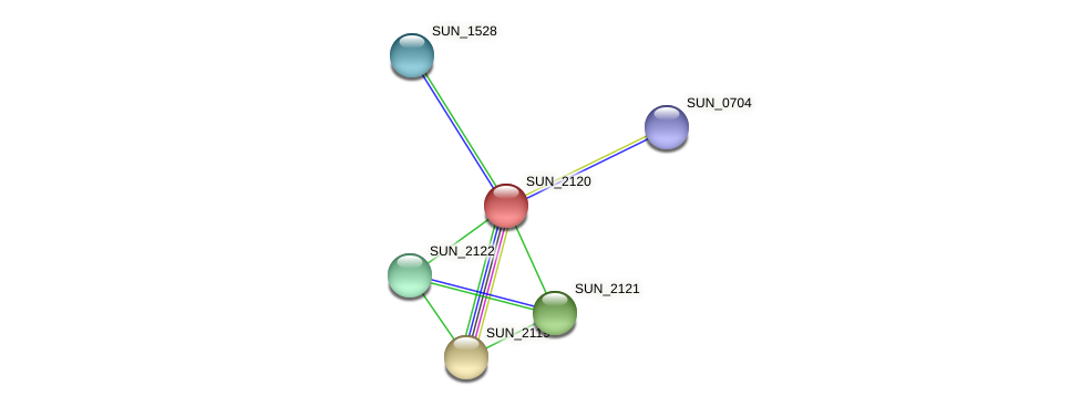 SUN_2120 protein (Sulfurovum sp. NBC371) - STRING interaction network
