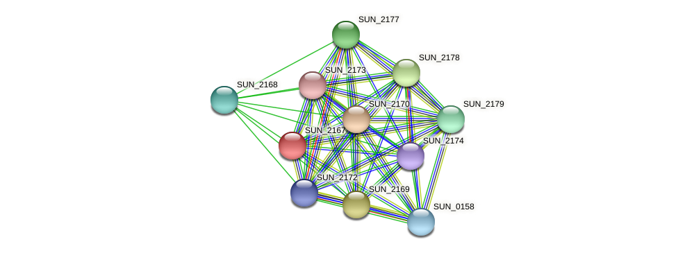 SUN_2167 protein (Sulfurovum sp. NBC371) - STRING interaction network