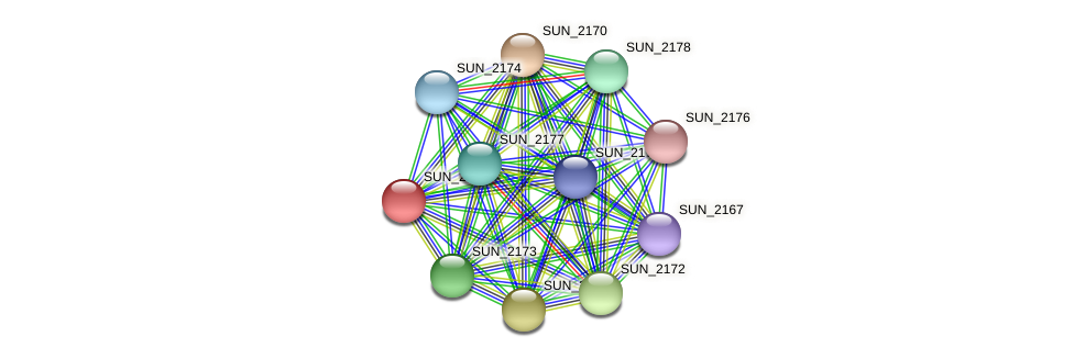SUN_2169 protein (Sulfurovum sp. NBC371) - STRING interaction network