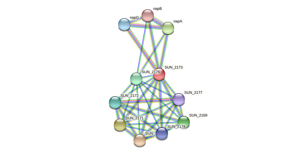 SUN_2173 protein (Sulfurovum sp. NBC371) - STRING interaction network