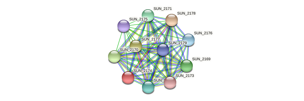 SUN_2174 protein (Sulfurovum sp. NBC371) - STRING interaction network