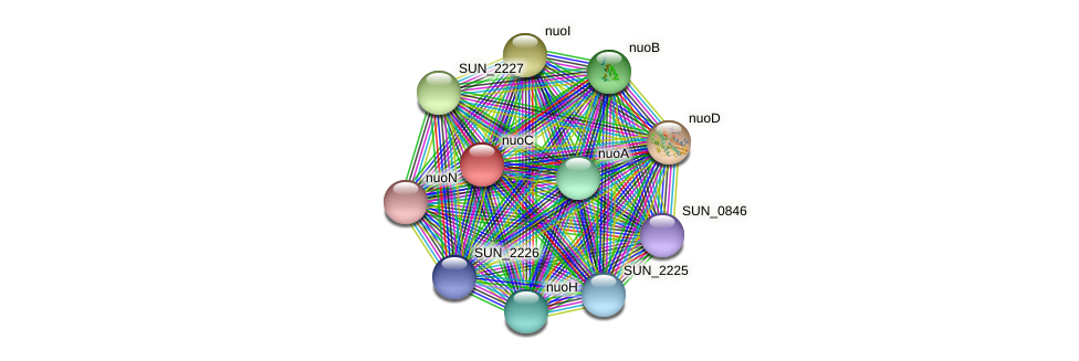nuoC protein (Sulfurovum sp. NBC371) - STRING interaction network