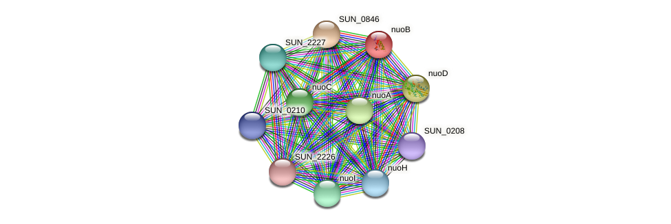 nuoB protein (Sulfurovum sp. NBC371) - STRING interaction network