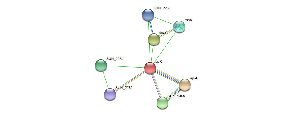 ppiC protein (Sulfurovum sp. NBC371) - STRING interaction network