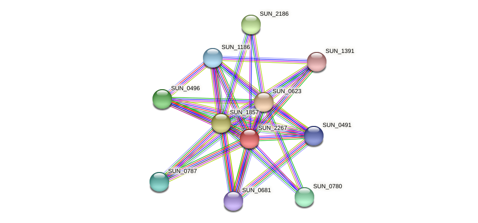 SUN_2267 protein (Sulfurovum sp. NBC371) - STRING interaction network