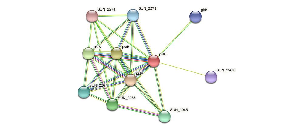 pstC protein (Sulfurovum sp. NBC371) - STRING interaction network