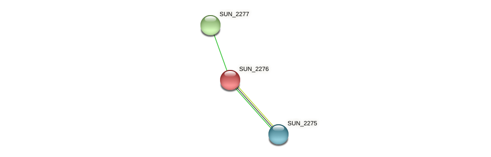 SUN_2276 protein (Sulfurovum sp. NBC371) - STRING interaction network