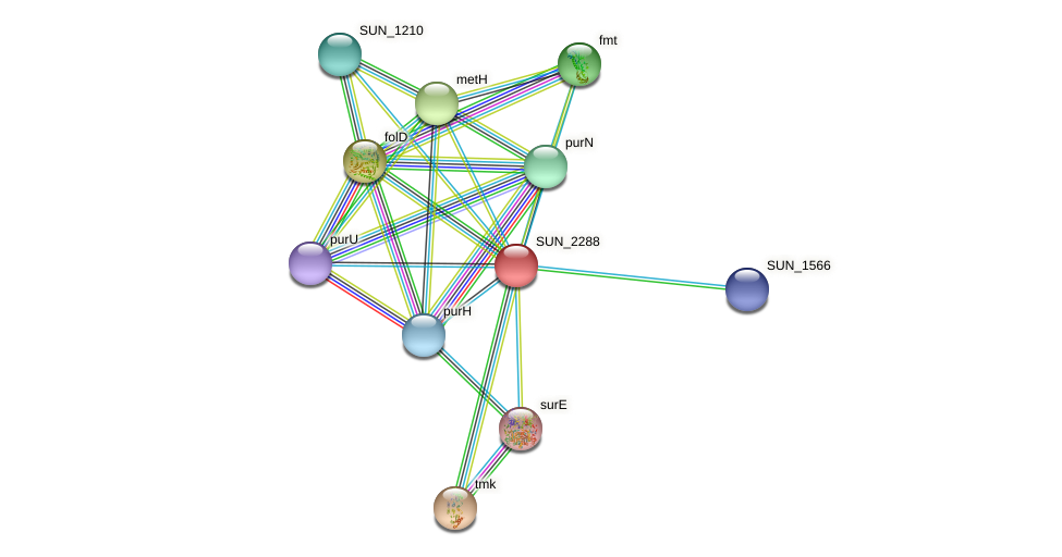 SUN_2288 protein (Sulfurovum sp. NBC371) - STRING interaction network