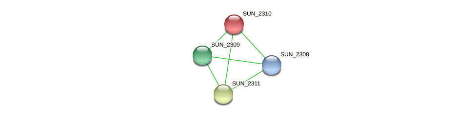 SUN_2310 protein (Sulfurovum sp. NBC371) - STRING interaction network