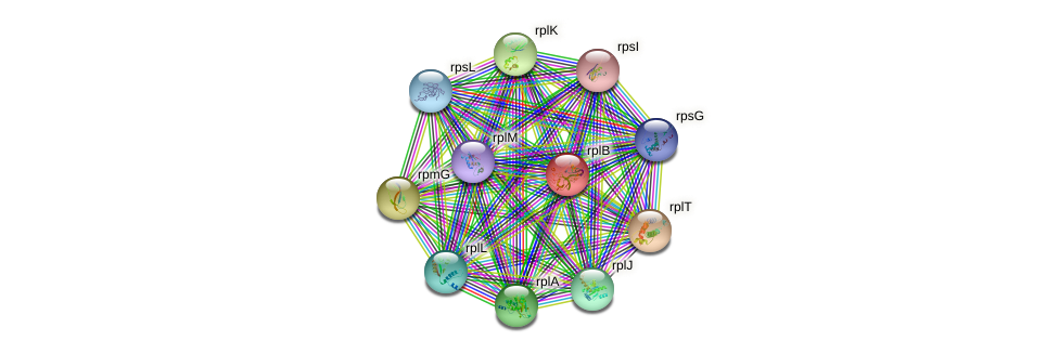 rplB protein (Sulfurovum sp. NBC371) - STRING interaction network