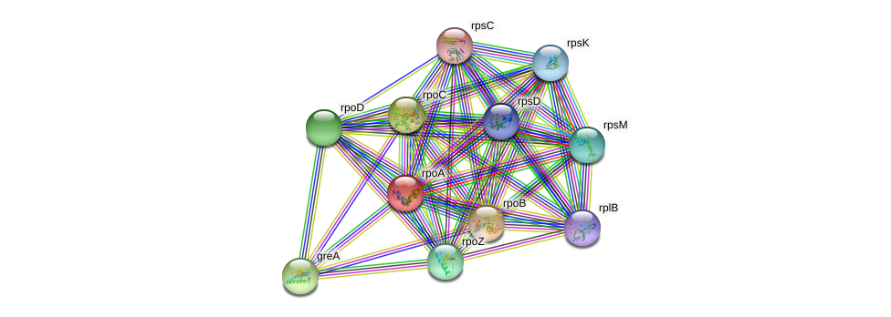 rpoA protein (Sulfurovum sp. NBC371) - STRING interaction network