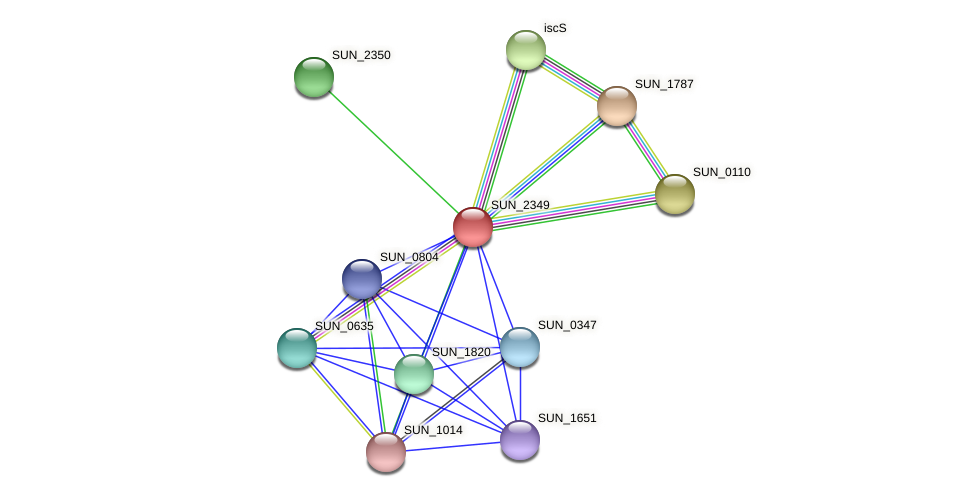 SUN_2349 protein (Sulfurovum sp. NBC371) - STRING interaction network