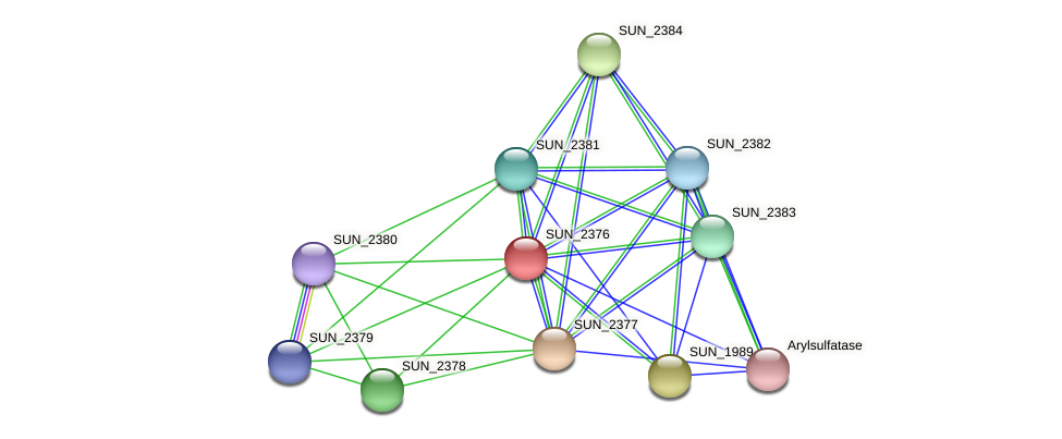 SUN_2376 protein (Sulfurovum sp. NBC371) - STRING interaction network