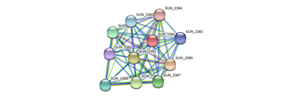 SUN_2392 protein (Sulfurovum sp. NBC371) - STRING interaction network