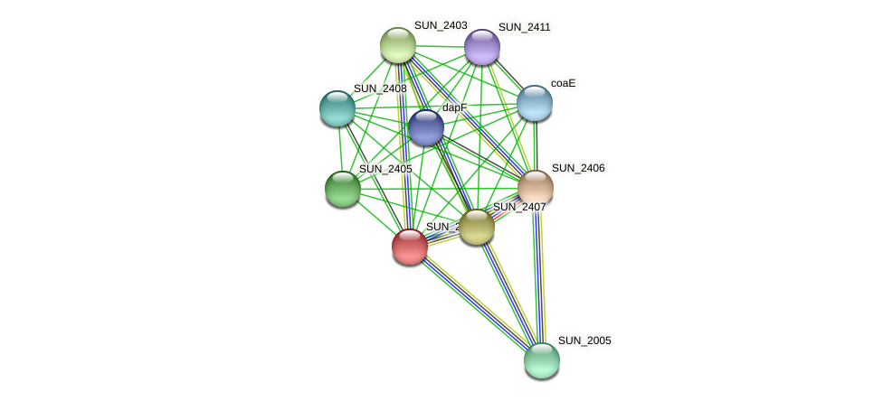 SUN_2404 protein (Sulfurovum sp. NBC371) - STRING interaction network