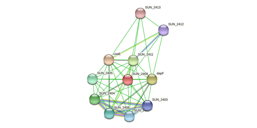 SUN_2408 protein (Sulfurovum sp. NBC371) - STRING interaction network