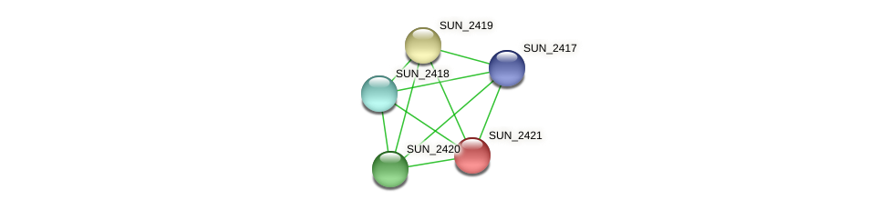 SUN_2421 protein (Sulfurovum sp. NBC371) - STRING interaction network