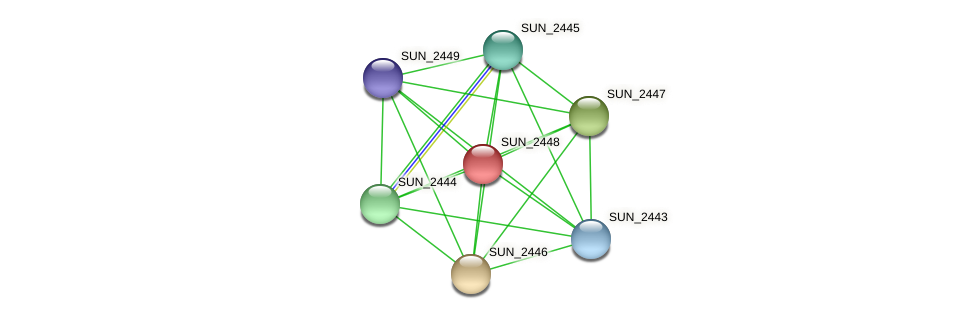 SUN_2448 protein (Sulfurovum sp. NBC371) - STRING interaction network