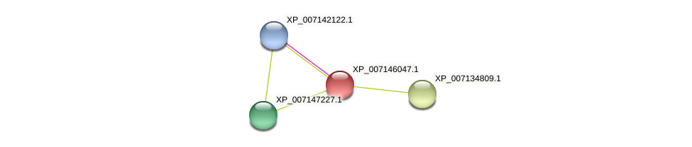 XP_007146047.1 protein (Phaseolus vulgaris) - STRING interaction network