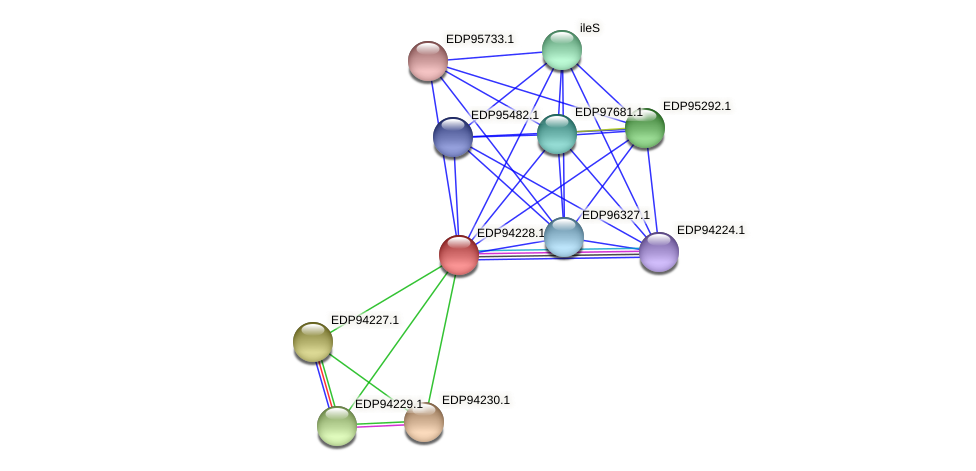 KAOT1_00770 protein (Kordia algicida) - STRING interaction network