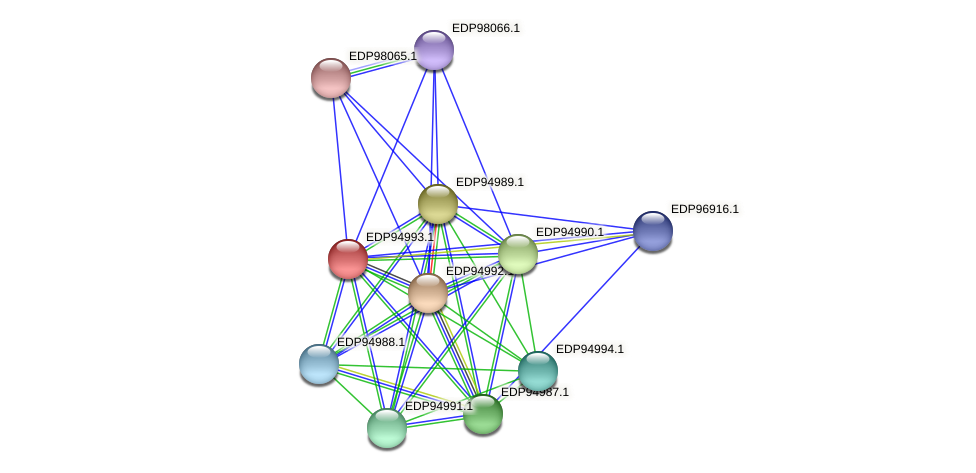 KAOT1_01619 protein (Kordia algicida) - STRING interaction network