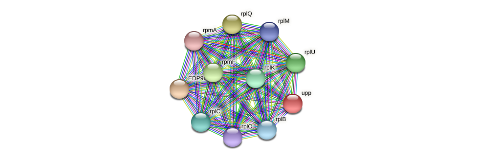 upp protein (Kordia algicida) - STRING interaction network