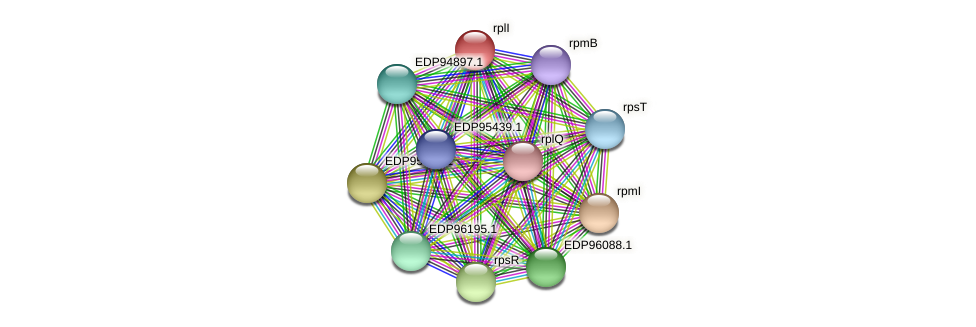 rplI protein (Kordia algicida) - STRING interaction network